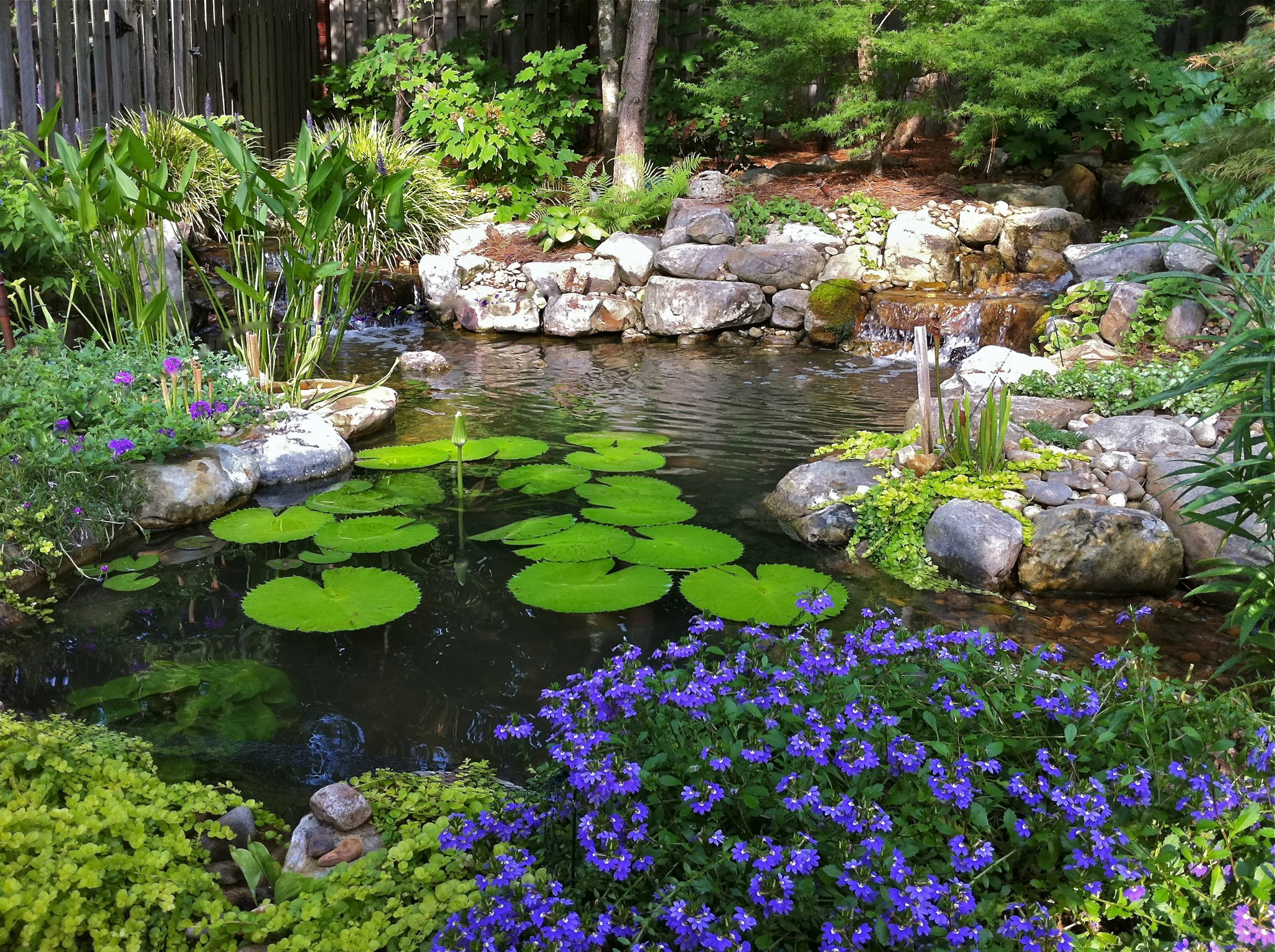 The Need For Water Gardens Today