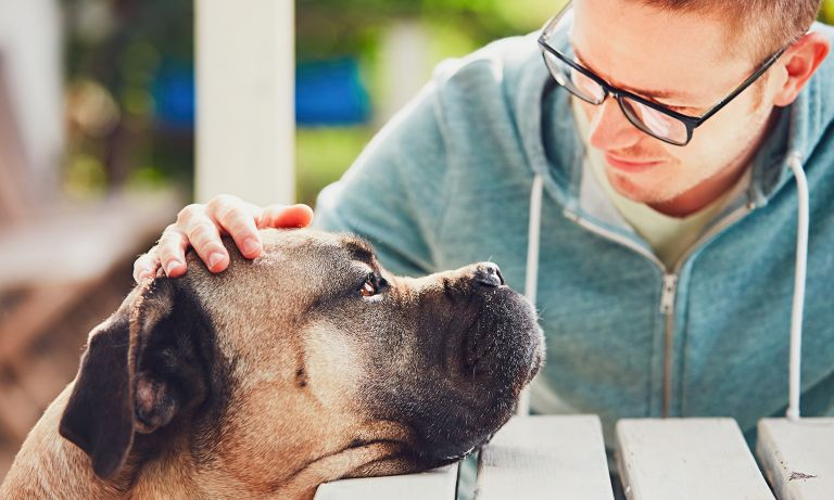 Compassionate Look After Your Ageing Dog